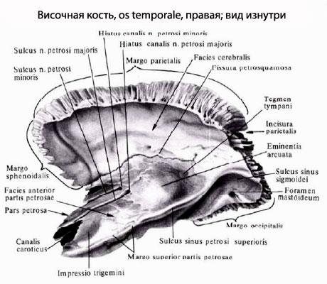 osul temporal articulatii